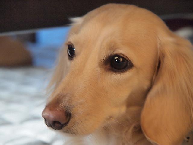 高齢・老犬用ベッドマット