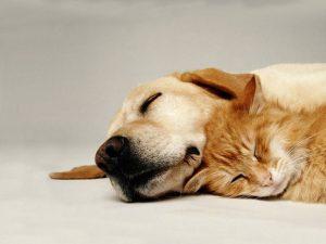 シニア犬 ペットケアマット