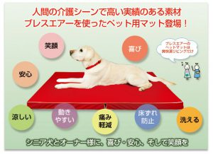 dog-kaigo-001